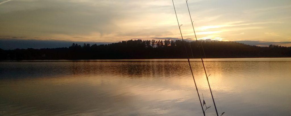 NÖMMEN Sonnenuntergang Zander Lachs Lachsforelle