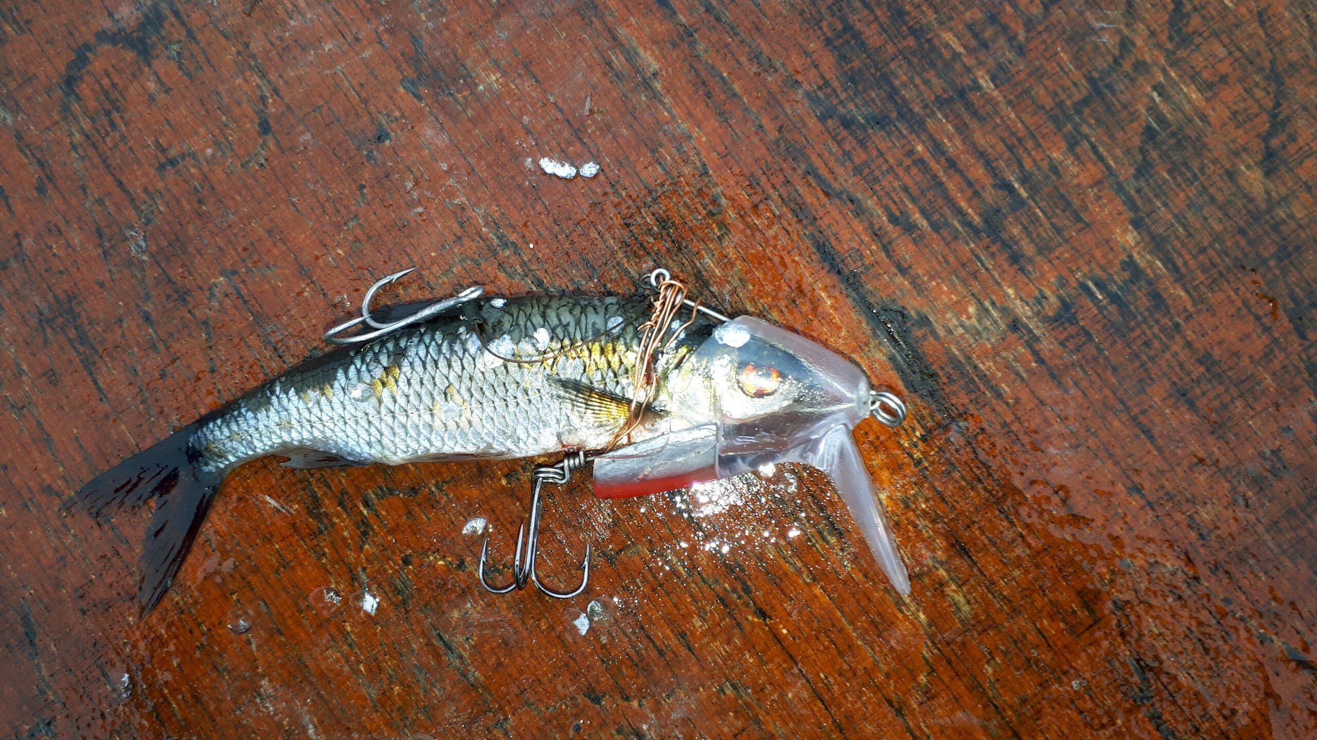Trolling Schleppköder Fisch